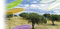 oliviershaut.jpg